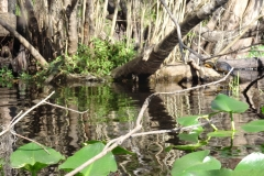 snake_creek_24